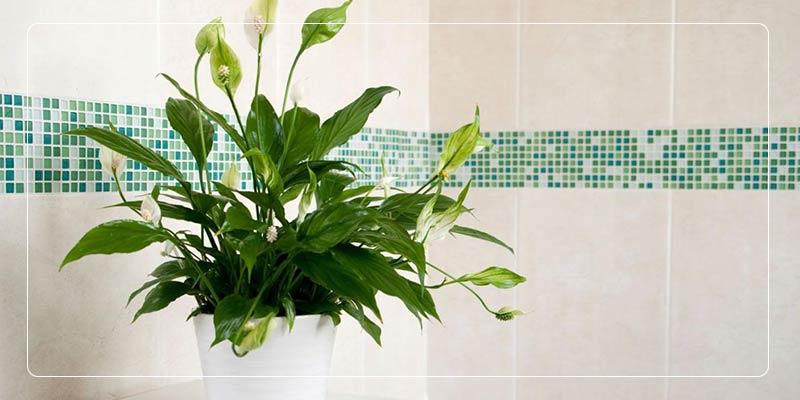 گیاهان آرامش بخش خانگی